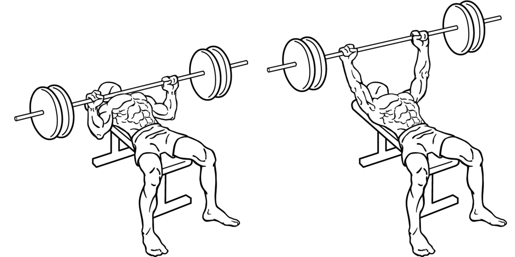 Overhead Press Exercise Diagrams Car Wiring Diagrams Explained